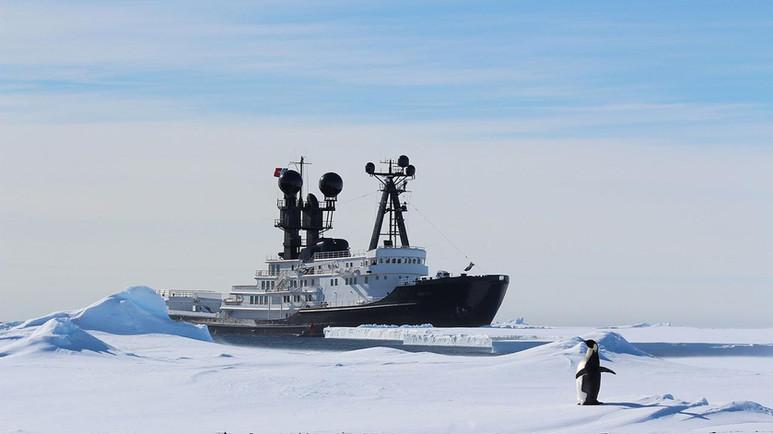 Arctic P