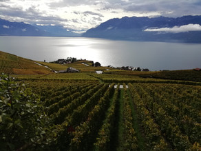 FAM Trip: Why Lake Geneva has more to offer than many realise.