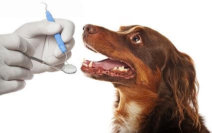 dental hygiene for dogs.jpg