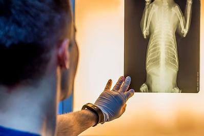 Veterinary doctor examining pet radiogra