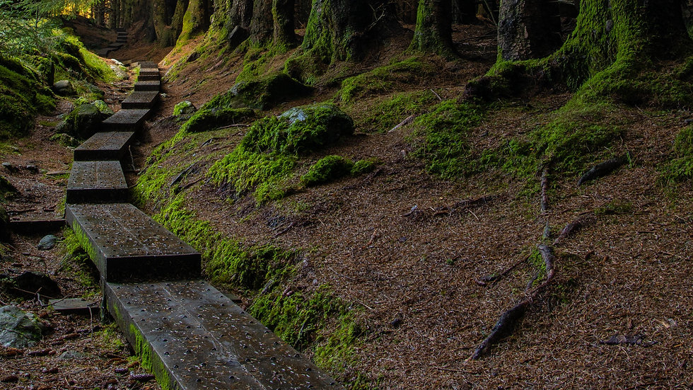 Steps to the Enchanted Forest