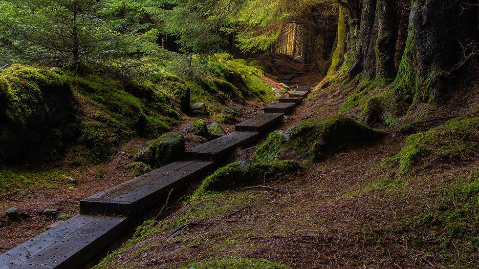 Steps at Ballinastoe Woods
