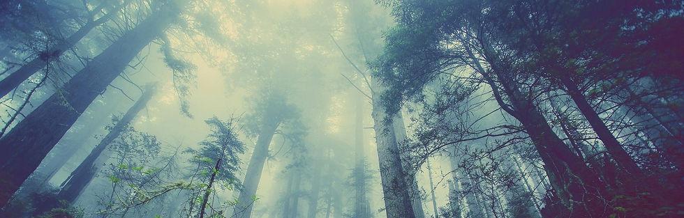 forest-931706_1920_green_edited.jpg