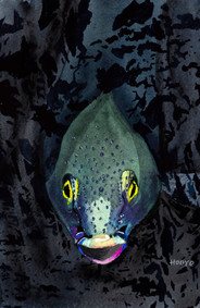 Denizen of the Deep - Coming at You
