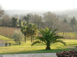 vigne et palmier du Jurançon