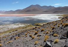 lagune Colorada.JPG