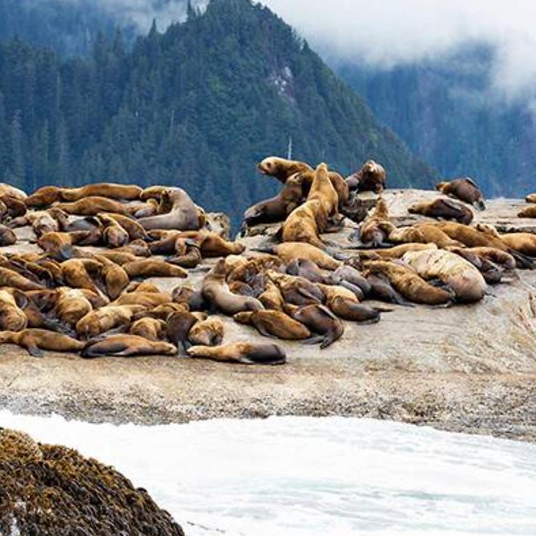 Alaska Opens