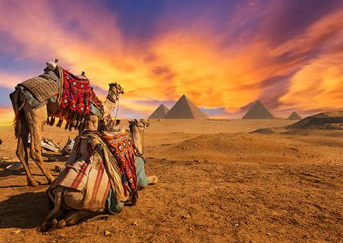 Egypt_Camels_Gallery (1).webp