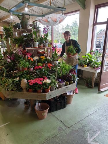Colyton Garden Shop Website