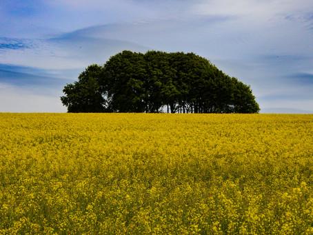 Tinhead Hill and Long Barrow