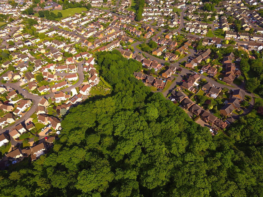 Vincients Wood from above