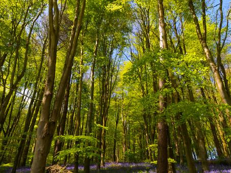 Erlestoke Park Wood