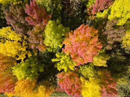 Autumn in Hidden Wiltshire
