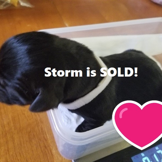 Storm_Female_Sold.jpg