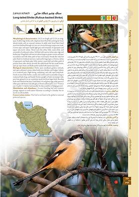 Birds of Persia.jpg