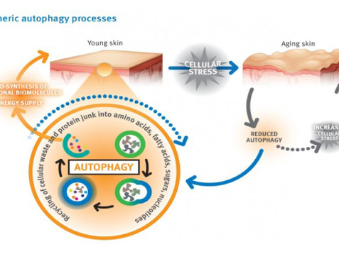 Autophagy & Skin: How to hack your cellular processes for a more youthful complexion