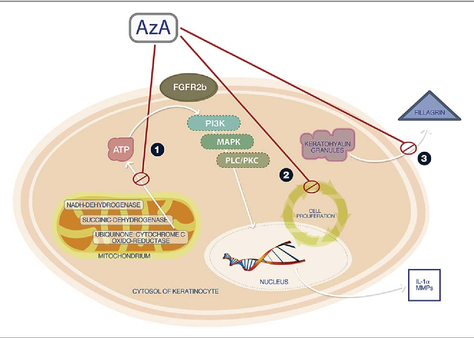 Ingredient Spotlight : Azelaic Acid