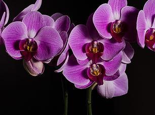 orquidea fondo negro.jpg