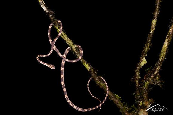 Taller Macrofotografía (de pequeñas especies y plantas) - ONLINE