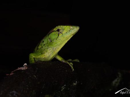 Adentrándonos en la fotografía macro de especies