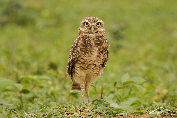 Taller Fotografía de fauna y aves