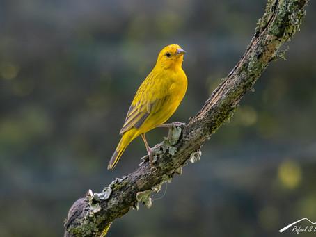 Fotografía de aves en el patio de la casa