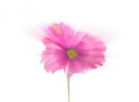 Fotografía creativa de flores en casa # 1