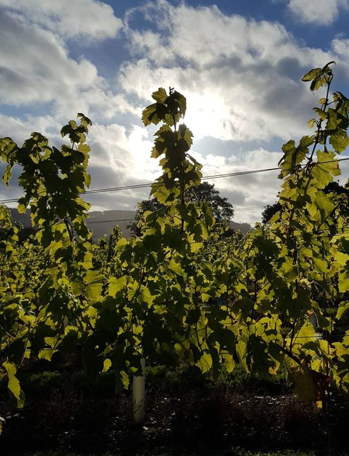 silhouetted vines.jpg