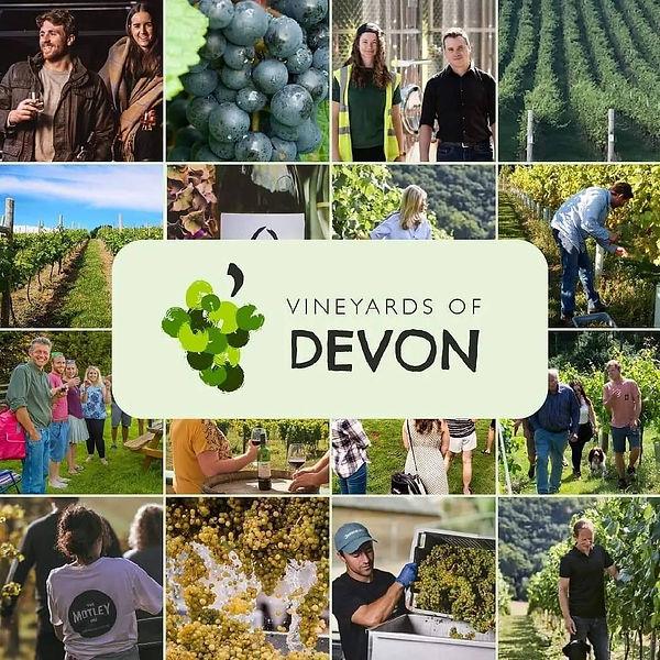 Vineyrads of Devon.jpg