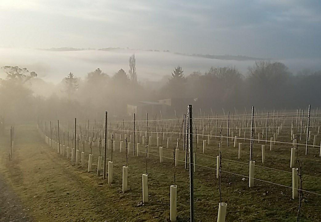 best misty vineyard.jpg
