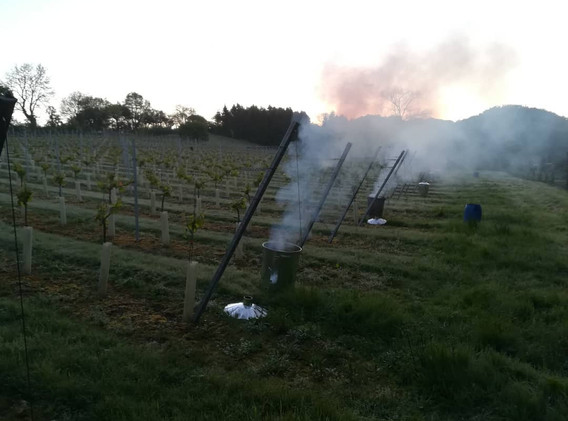 vineyard braziers.jpg
