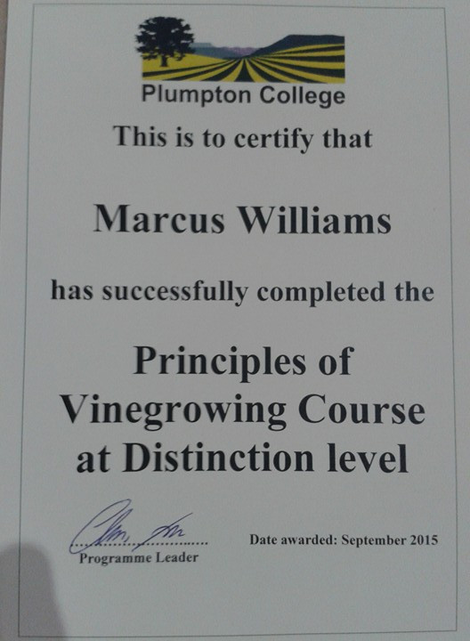 Marcus' certificate.jpg