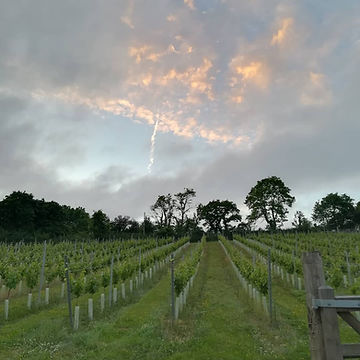 vineyard skies.jpg