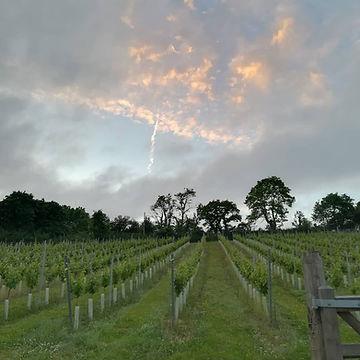 vineyard skies.jpg