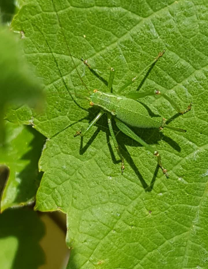 green insect.jpg