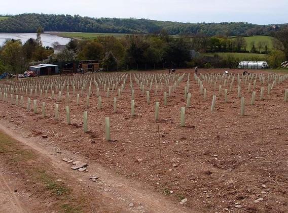 2016 planting.jpg