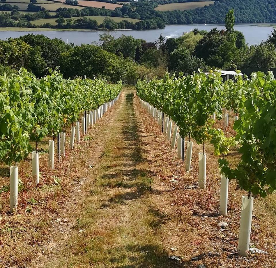 vineyard and river yamar.jpg