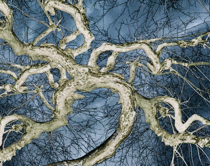 Bäume-ArtefakteVIII-30x20cm   Euro 600,-