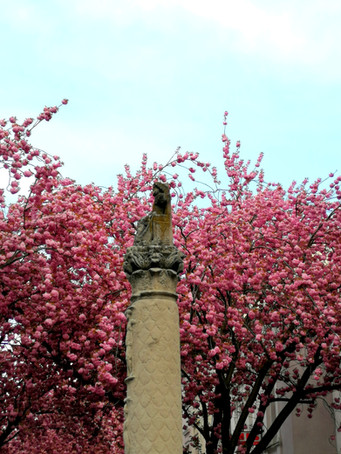 UPdate GALLERY_Bonn_Cherry_Blossom