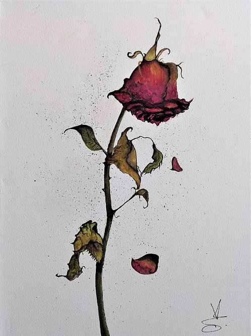Blossom Collection 'The Rose That Died'