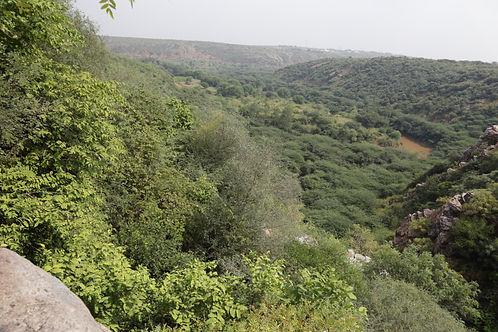 Dhau trees in manger - large expanse.jfi