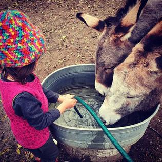Kinder versorgen die Tiere