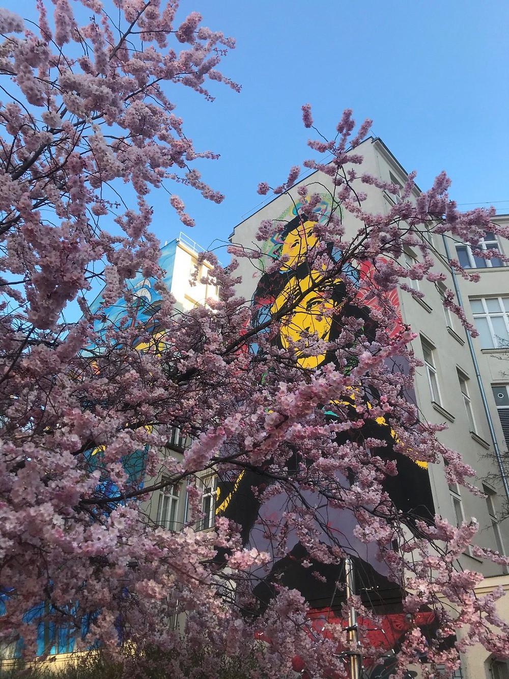 Foto Vera Geissmann: blühende Bäume vor der Ordination in der Magdalenenstraße