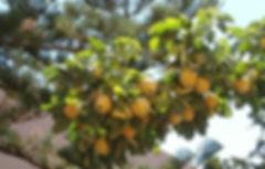 Lemons%252C%2520Fiscardo_edited.jpg