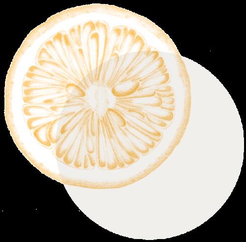 Logo de Nutritherapy, une rondelle de citron jaune et une pastille grise claire superposée.