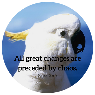 All great changes are preceded by chaos.