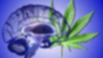 hemp leaf brain pic.jpg