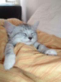 cute-cats-sleeping-8.jpg