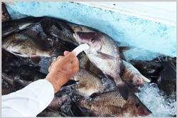 fish-pick-up-300x200