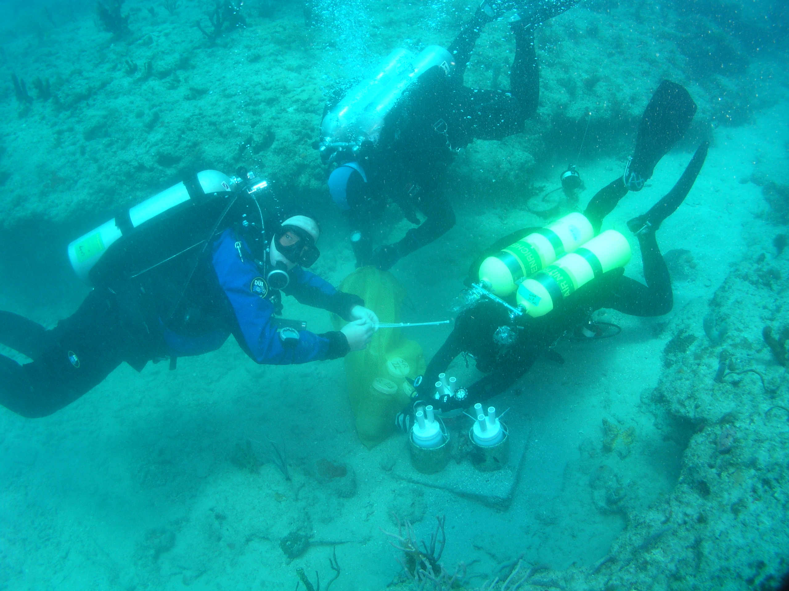 SOUTH FLORIDA RESEARCH DIVERS
